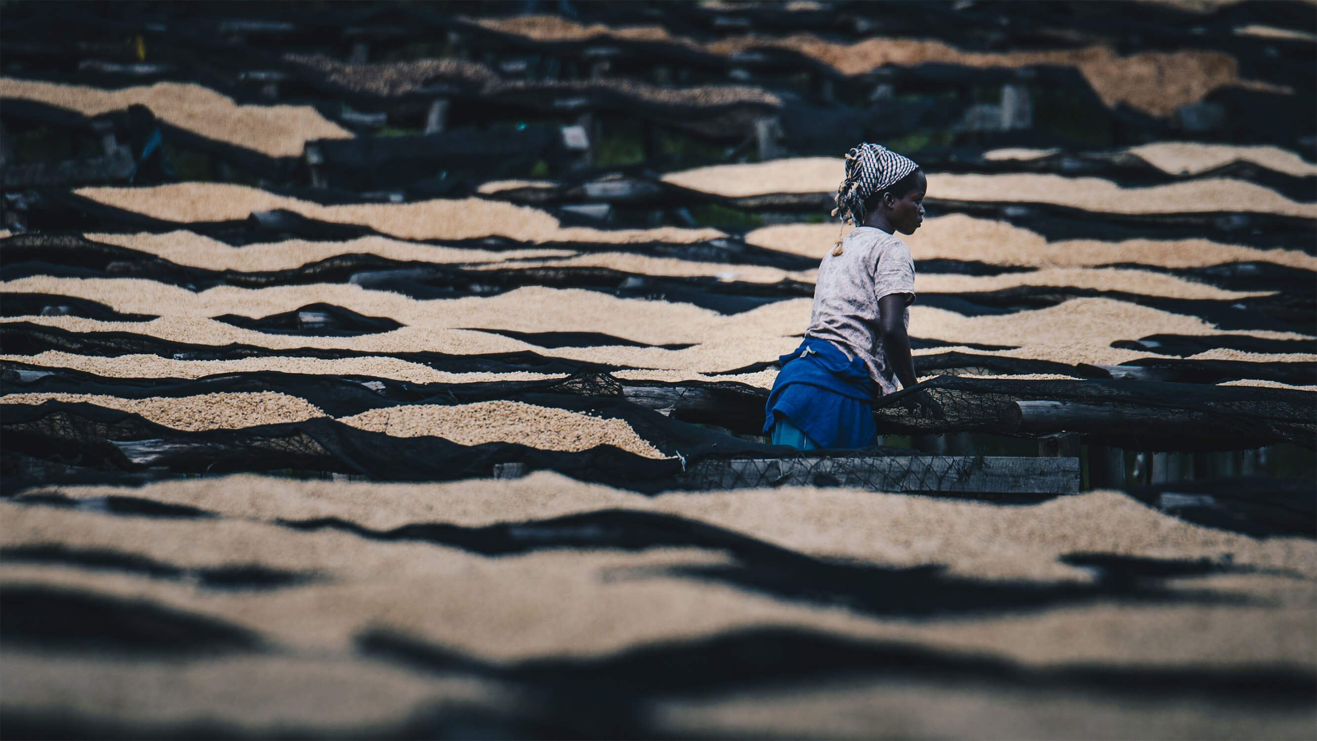 woman-on-coffee-farm